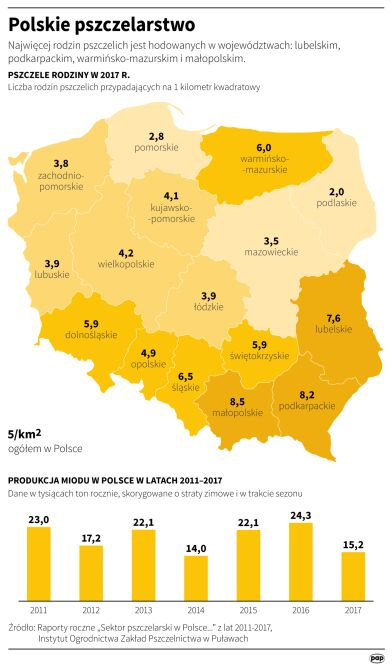 Pszczelarstwo w Polsce (Maciej Zieliński/PAP)