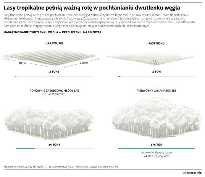 Lasy tropikalne pełnią ważną rolę w pochłanianiu dwutlenku węgla (Adam Ziemienowicz/PAP/ Reuters)