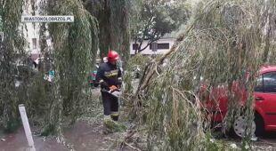 Powalone drzewo w Kołobrzegu